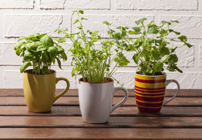 5 dicas para ter uma mini horta de temperos